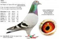 Picture of Chris Hebberecht pigeon BE10-4316306