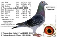 Picture of Chris Hebberecht pigeon BE99-4262210
