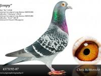 Chris Hebberecht pigeon BE07-4373192