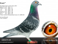 Chris Hebberecht pigeon BE10-4302473