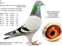 Chris Hebberecht pigeon BE10-4316306
