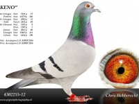 Chris Hebberecht pigeon BE12-4302255
