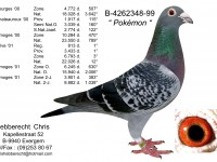 Chris Hebberecht pigeon BE99-4262348