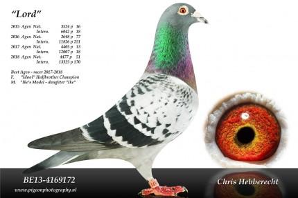 Chris Hebberecht pigeon BE13-4169172